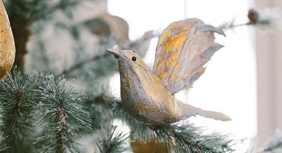 holiday_bird_closeup550